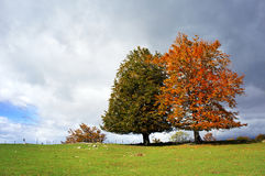 wallpaper-two-trees-29287091